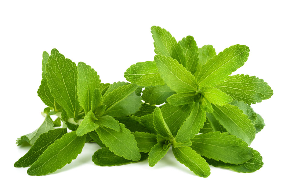 Lilly Blog - Stevia - Medna trava stevija